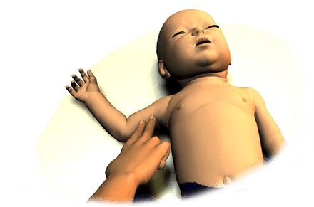 Use the brachial artery to check for a pulse on an infant victim