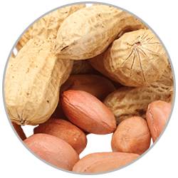How to administer first aid to victims suffering allergic reactions to peanuts and other food